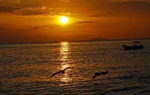 desecheo crash boat pelican